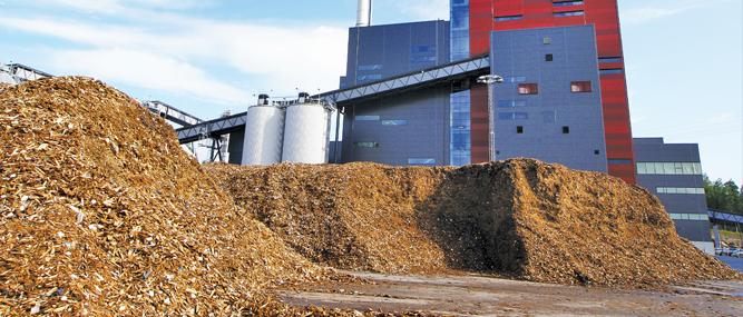 biomasa planta